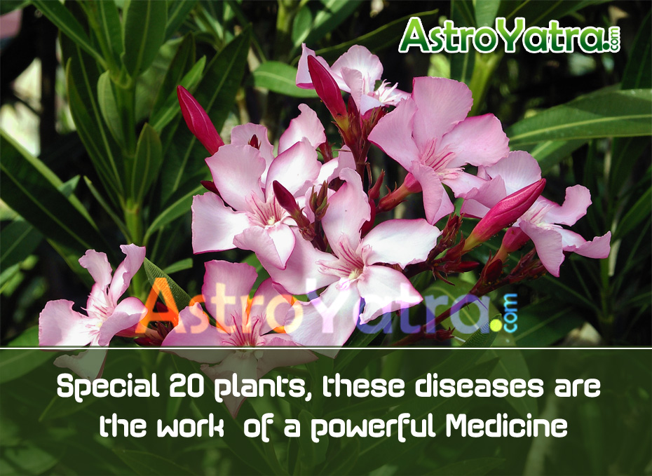 Special 20 plants, these diseases are the work of a powerful Medicine